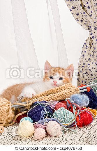 tricotando, gatinho - csp4076758