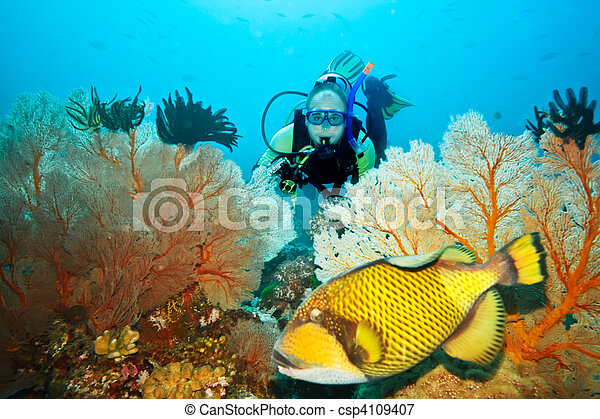 Triggerfish and diver - csp4109407