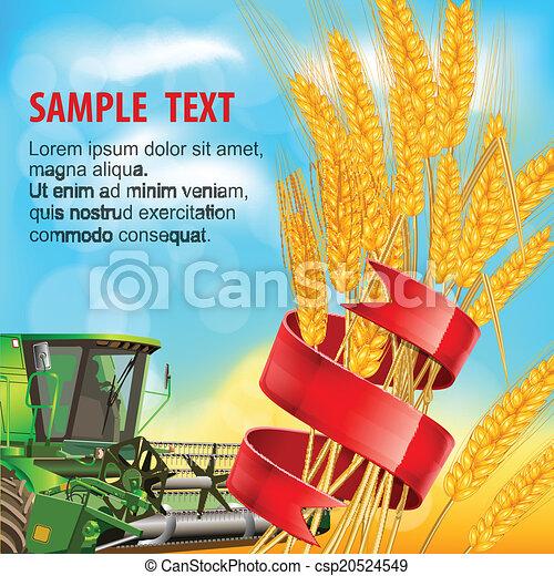 Orejas de trigo con cinta - csp20524549