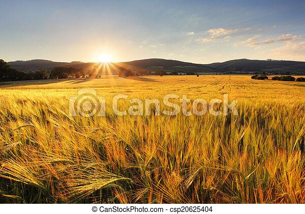 trigo, industria, -, granja, campo, agricultura - csp20625404