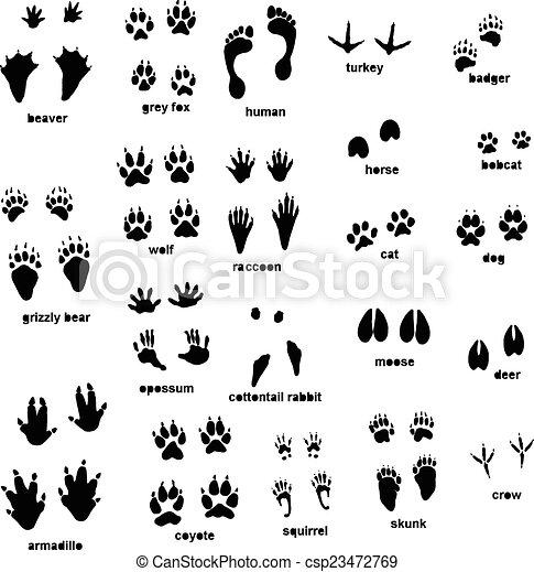 trilhas, animal - csp23472769