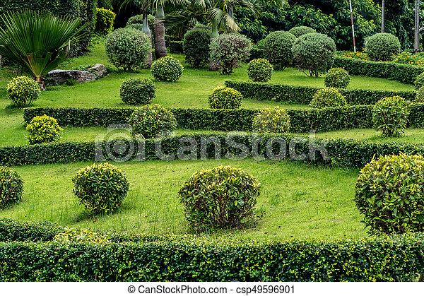 Trimmed bush plants