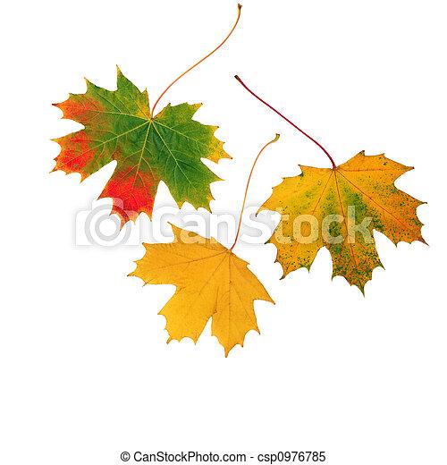 Trio of Leaves - csp0976785
