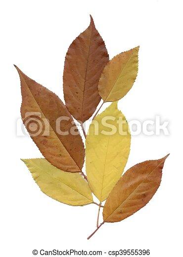 Herbarium Blätter trocken hintergrund blätter weißes herbarium trocken eps