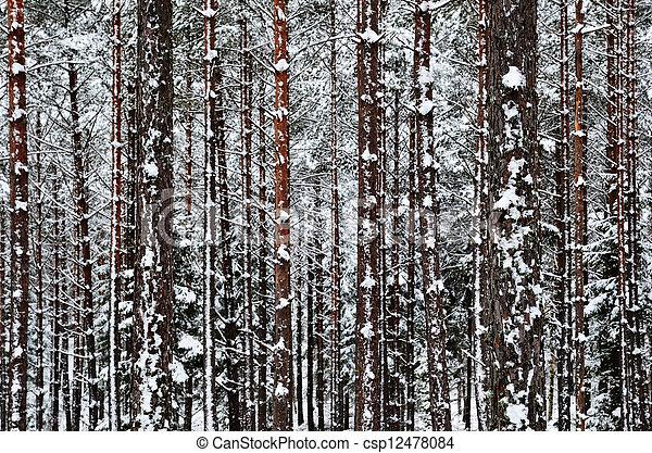 troncos, inverno, fundo - csp12478084