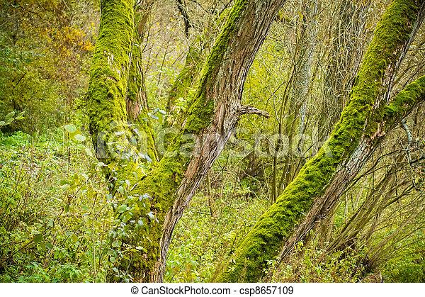 Troncs bryophytes arbre clair vert mousse troncs - Mousse sur les arbres ...