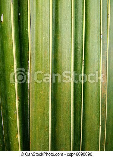 tropen, cocosnoot, bladeren, bomen - csp46090090