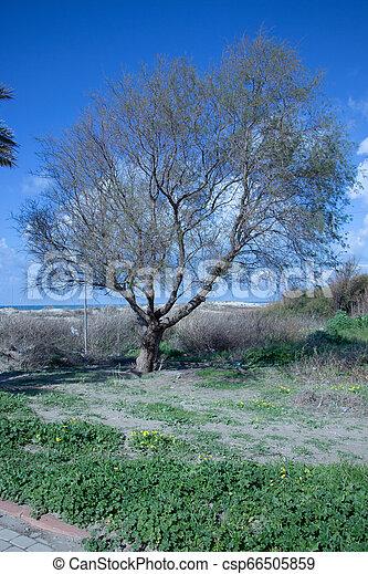 Tropic nature view - csp66505859