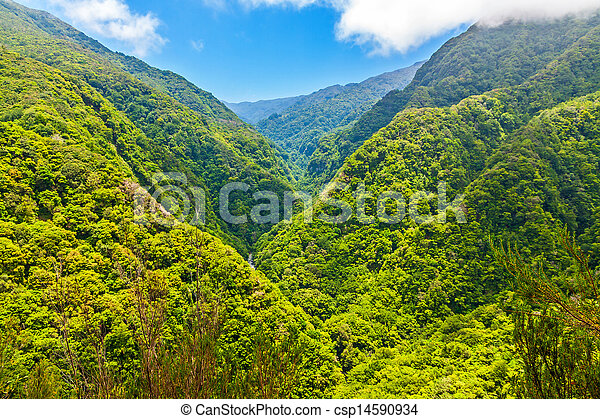tropicais, meio ambiente - csp14590934