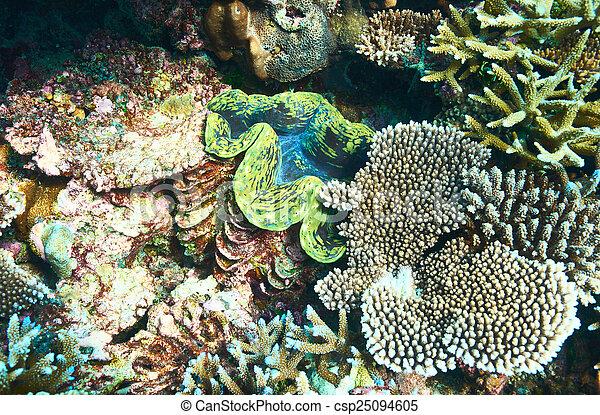 Almeja gigante en el arrecife de coral tropical - csp25094605