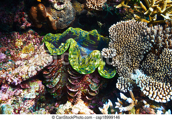 Almeja gigante en el arrecife de coral tropical - csp18999146