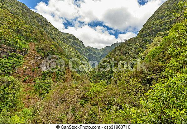 Un ambiente tropical - csp31960710