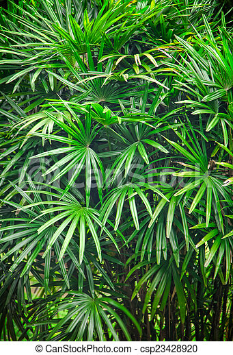 Tropical Asian Rain Forest Leaves Background Canstock Download a free preview or high quality adobe illustrator ai, eps, pdf and high resolution jpeg versions. can stock photo