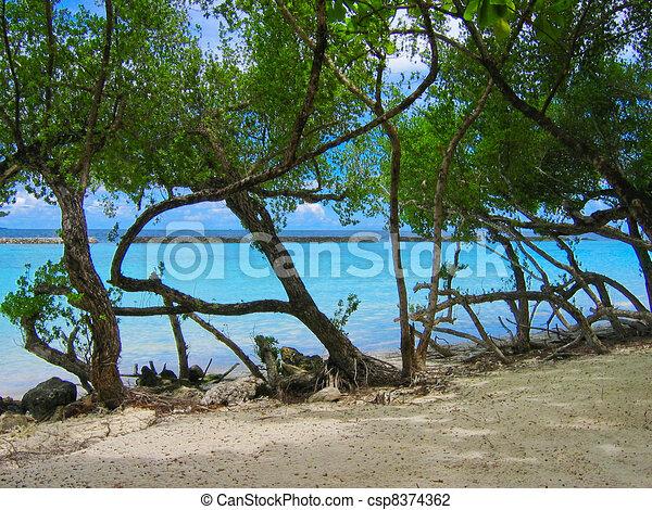 Tropical beach - csp8374362