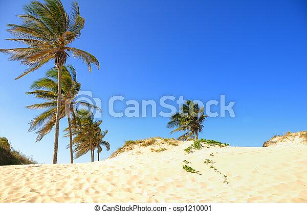 Tropical beach - csp1210001