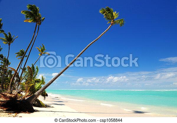 Tropical beach - csp1058844