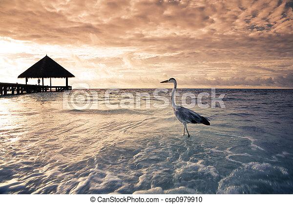 tropical beach - csp0979910