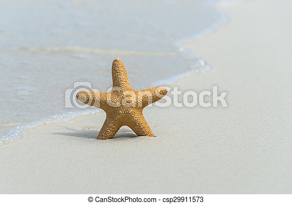 Tropical beach with a starfish on sand, sea view and sand. - csp29911573