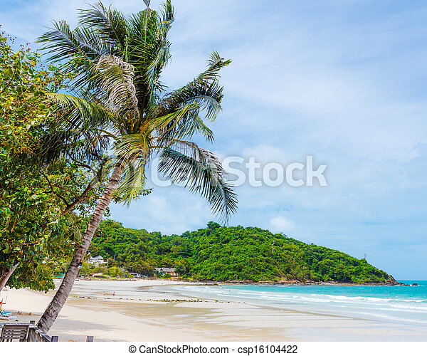 Tropical beach with palm trees - csp16104422