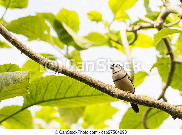 tropical bird - csp27504290