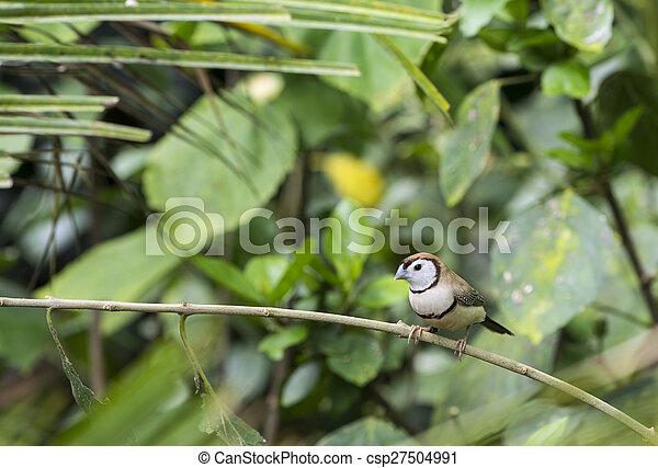 tropical bird - csp27504991