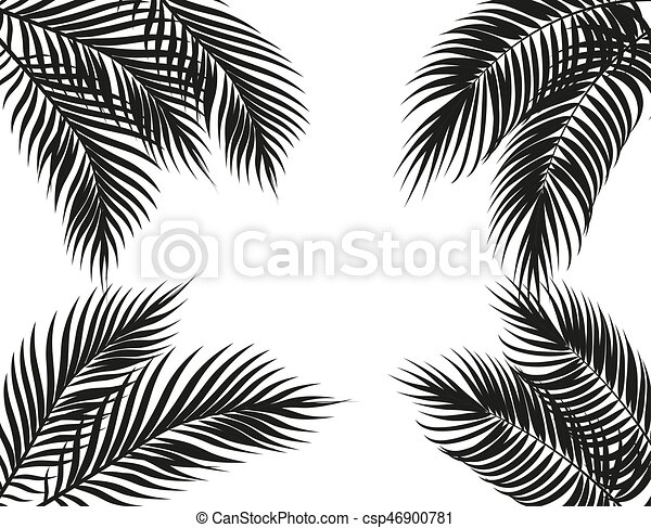 Tropical Black And White Palm Leaves On Four Sides Set Isolated On White Background Illustration Tropical Black And White Canstock Tropical leaves black and white. https www canstockphoto com tropical black and white palm leaves on 46900781 html