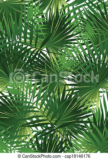 Tropical Cabbage palm - csp18146176