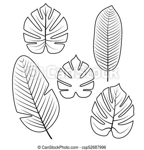 Colección De Hojas Tropicales Ilustración De Vectores