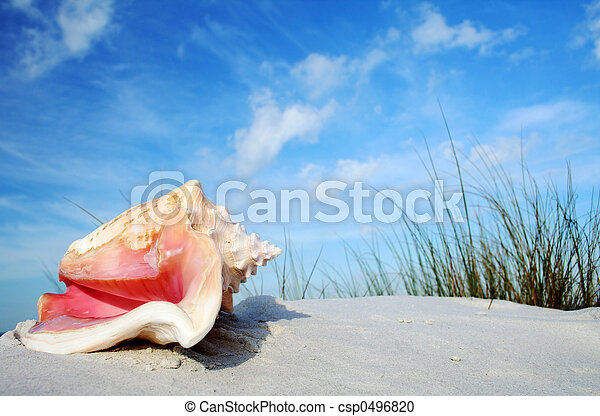 Tropical Conch - csp0496820