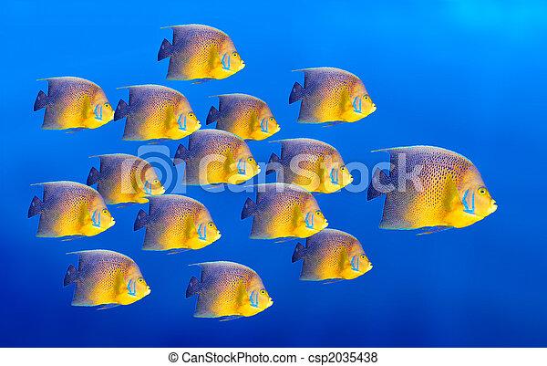 Pescado de coral tropical aislado - csp2035438