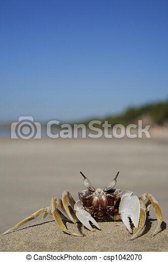 Tropical Crab - csp1042070