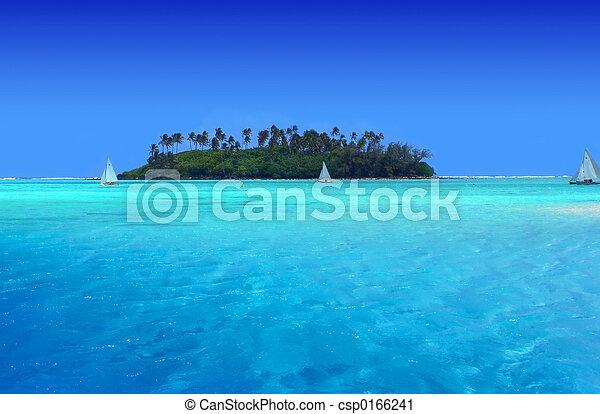 Diversión tropical - csp0166241