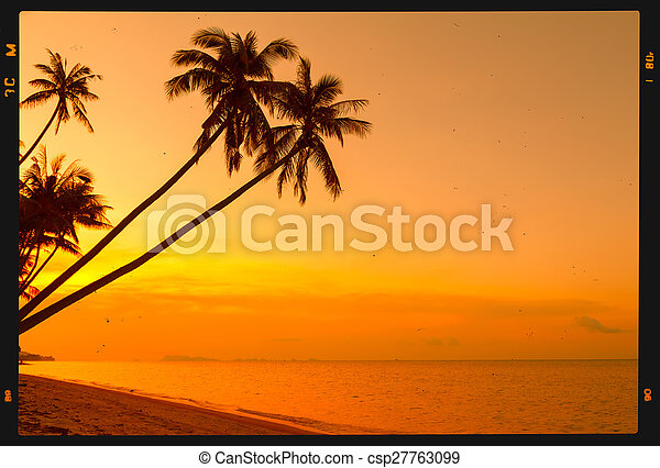 Palmeras tropicales en la playa - csp27763099