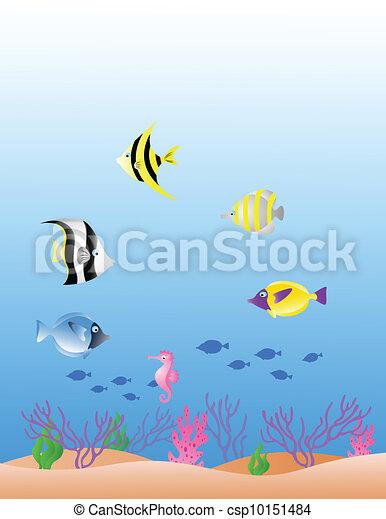 Tropical Fish  - csp10151484