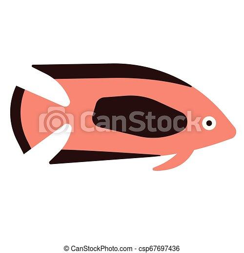 tropical fish flat illustration on white - csp67697436