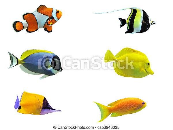 tropical fish - csp3946035