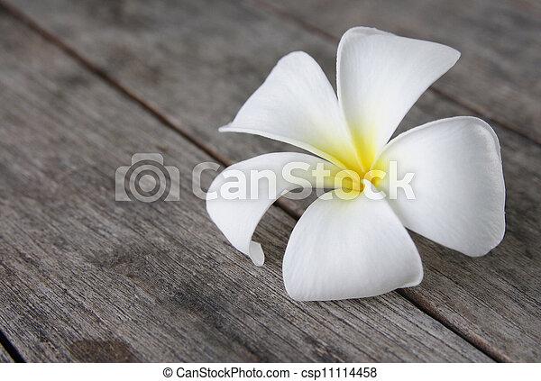 Tropical flowers frangipani (plumeria) on wood - csp11114458