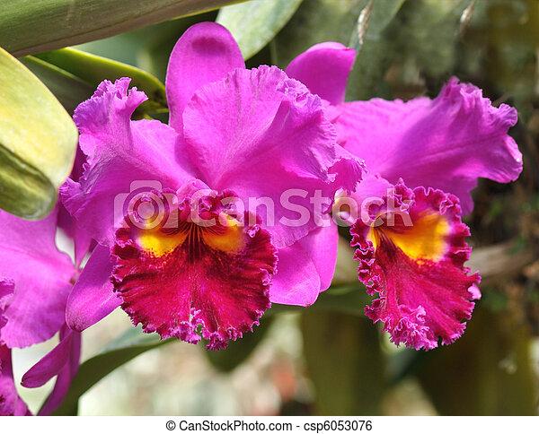 tropical flowers - csp6053076