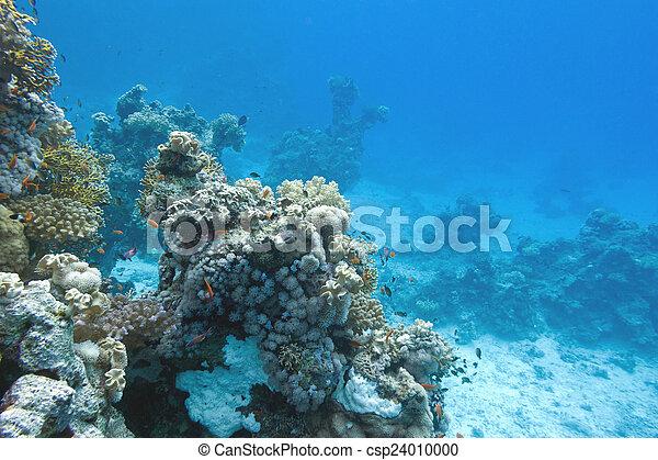 Coral arrecife en el fondo del mar tropical, bajo el agua - csp24010000