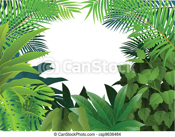 Tropical Forest Background - csp9636484