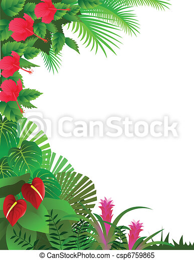 Tropical forest - csp6759865