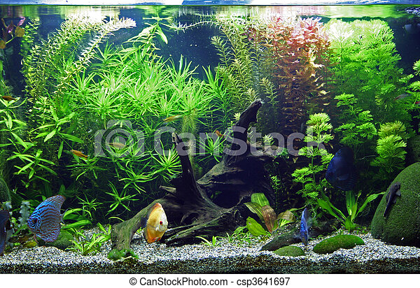 Tropical Freshwater Aquarium - csp3641697