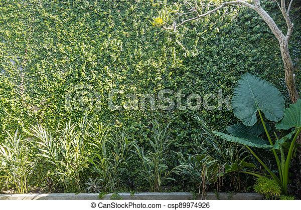 Tropical Garden backyard - csp89974926