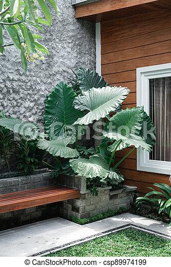 Tropical Garden backyard - csp89974199