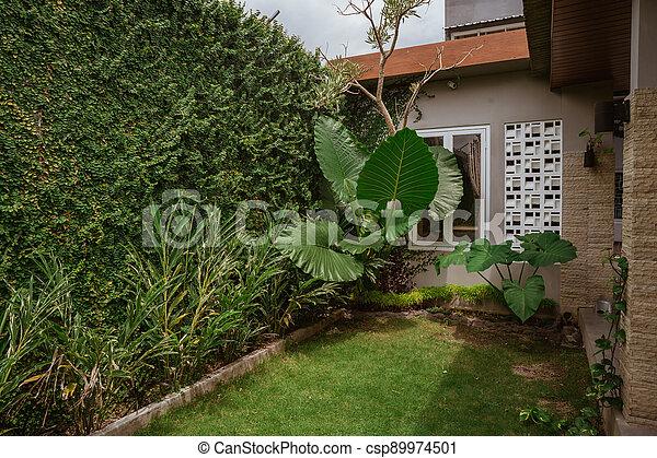 Tropical Garden backyard - csp89974501