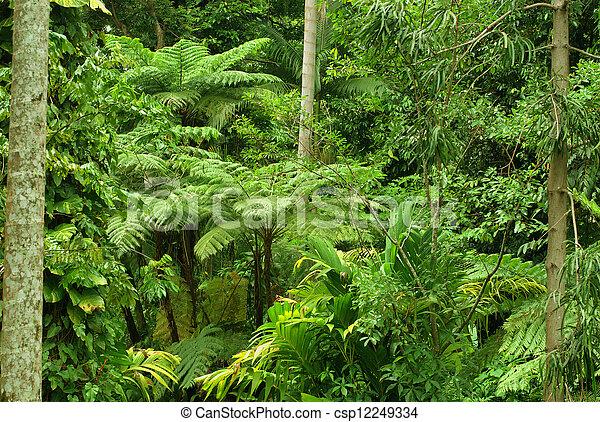 Tropical Garden in Cairns, North Queensland, Australia - csp12249334