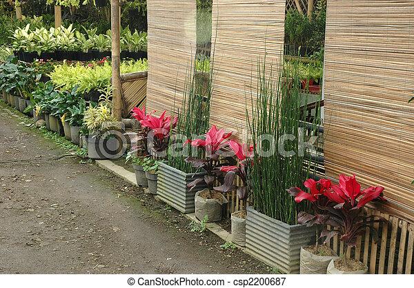 tropical garden - csp2200687