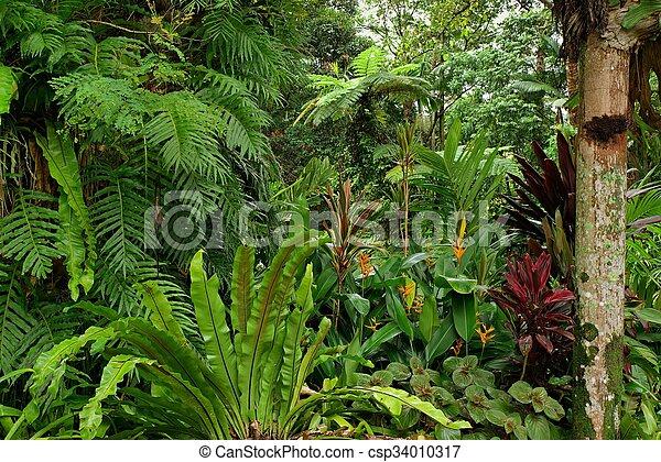 Tropical Garden - csp34010317