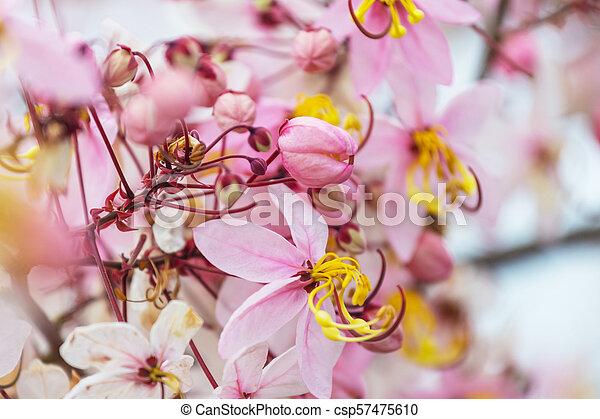 Tropical garden - csp57475610