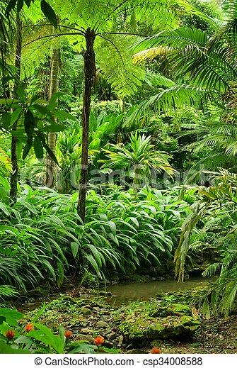 Tropical Garden - csp34008588